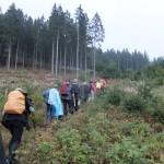 4. Porębą w lesie świerkowym, gdzie...