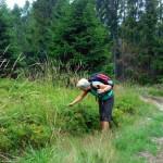 15. Wyżej w lesie trafiliśmy na takie bogactwo borówek...