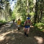 20. Początek podejścia wiódł świerkowym lasem.