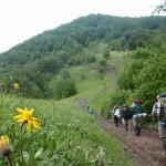 11. Odprowadzani przez kwiaty arniki górskiej ruszamy w dalszą drogę…