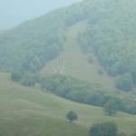 22. …obserwując stado owiec podchodzące bocznym grzbietem ku polanie…