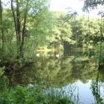 """20. Na jeziorkach w rezerwacie """"Niebieskie Źródła"""" obserwowaliśmy ptaki wodne…"""