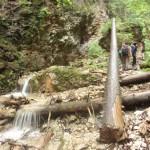 28. Teren doliny to rezerwat, gdzie wszystko pozostaje bez ingerencji człowieka.
