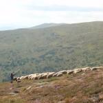 33. …i wsłuchując się w melodię dzwonków stada owiec.