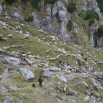 64. Pasterstwo w rumuńskich Karpatach ma się jeszcze nieźle…