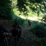 32. Na początku trasa wiodła bukowym, cienistym lasem…