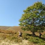 34. …do ostatniego drzewa na trasie, z którego cienia niektórzy skwapliwie skorzystali.
