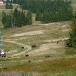 47. I zjeżdżając krzesełkami, i schodząc, widzieliśmy stada koni pasących się na stoku.