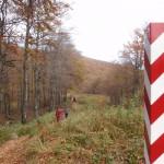 18. …szeroką wycinką w lesie bukowym.