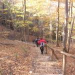 31. Stopniami terenowymi w bukowym lesie…