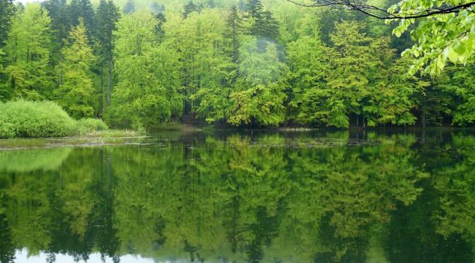 23. Większe jeziorko jest dziś o połowę mniejsze niż w latach międzywojennych.