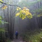 17. Schodząc zielonym szlakiem do Stefanovej …