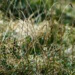 27. Na trawie stoku perliły się krople rosy…