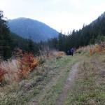 38. …a my ciągle schodziliśmy świerkowym lasem.