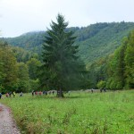 5. Z łąki szlak powiódł nas do lasu…