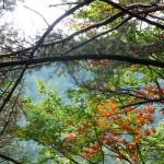 7. W koronach drzew jesień rywalizowała z latem.