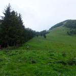 8. Nad pasterską łąką i lasem ujrzeliśmy trawiasty szczyt Osnicy.