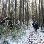 13. Wyżej w lesie świerki ustąpiły miejsca…