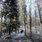 9. Przed Kopą ścieżka pięła się dość stromo w górę.
