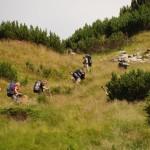 Zakosami na przełęcz Şaua Plaiul Mic.