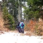 12. Podchodziliśmy wciąż wyżej ścieżkami leśnymi...