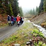 4. Podchodziliśmy obok potoku z kwitnącymi lepiężnikami...